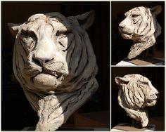 Mohan «tigre blanc royal»