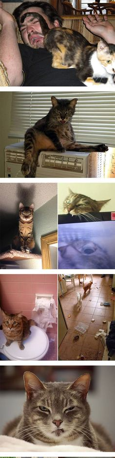Cats Are Evil Creatures - So much funnier happening to someone else...don't have cats, well because they're a** holes