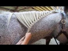 How to Braid a Horse's Mane by Snip n' Star I really like the waterfall braid. it looks like it could be done on a horse with short hair too Horse Mane Braids, Horse Hair Braiding, Milkmaid Braid, Fishtail Braid Hairstyles, Tail Braids, Horse Tail, Horse Grooming, Cute Horses, Mini Horses