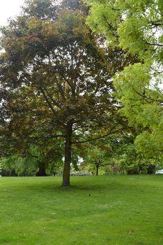#nature #paysage #arbre #parc