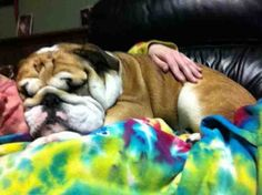 ~Porky~ all cuddle up with mom