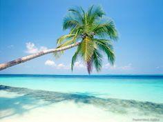 Palm Trees. Sun & Varadero Beach Cuba