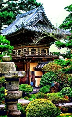 Japan - Thee tuin