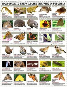 Fancy a wildlife safari? Just pop out of your door to see if there are more creatures in your garden than in the countryside - Modern Design Garden Ideas Uk, Garden Inspiration, Backyard Ideas, Grey Garden Furniture, North Garden, Wildlife Safari, Pop Out, Beautiful Gardens, Countryside