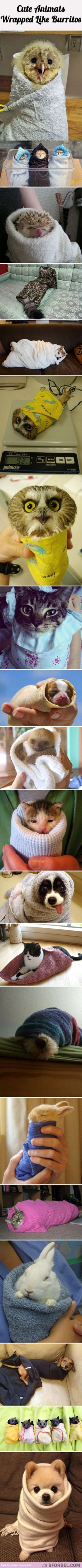 20 Animals Wrapped Like Burritos…