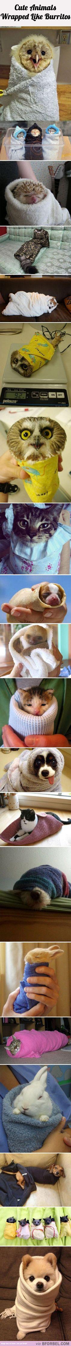 20 Animals Wrapped Like Burritos…