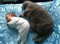 Kawaii! Grey fat cat and tiny baby