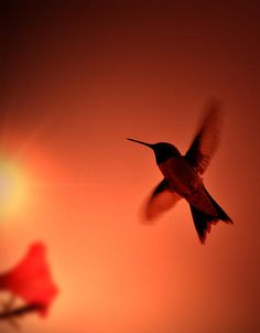 Sunset Hummingbird by Emily Stauring with Pin-It-Button on FineArtAmerica