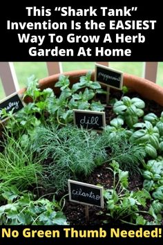 Get The Perfect Herb Garden With These Simple Tips Herb gardening is an excellent way to make sure that your family is getting the best produce that they can. Herb Garden Design, Lawn And Garden, Rooftop Garden, Green Garden, Growing Herbs, Growing Vegetables, Garden Plants, House Plants, Garden Shrubs