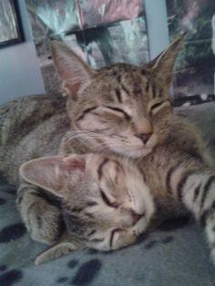 My two adorable cats Lexi & Sade <3