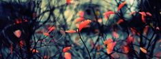 autumn leaves background 4 facebook cover