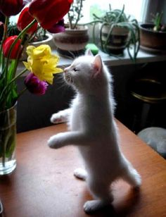 Remember to always stop and smell the flowers.