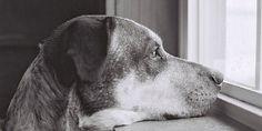 Voici ce que votre chien pense réellement de vous. Cela risque de vous toucher profondément.