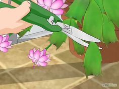 Care for a Christmas Cactus Step 12.jpg how to prune your cactus...and start new ones