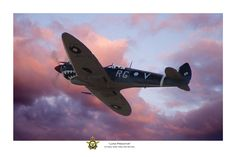 "Pacific Victory Roll - Spitfire Aviation Art - ""Lone Predator"" by Mark Donoghue Royal Australian Air Force, Aircraft Painting, Airplane Art, Supermarine Spitfire, Ww2 Aircraft, Aviation Art, Military Art, Fine Art Gallery, Wwii"