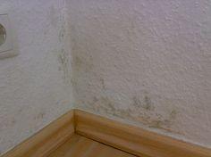 Schimmel an der Wand das kommt vom dauerfreuchtem Regen Grrr! Keine Ahnung was man tun kann ..... Fandom, Rain, Wallpapers
