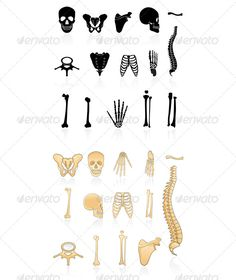VECTOR DOWNLOAD (.ai, .psd) :: http://jquery.re/pinterest-itmid-1005092661i.html ... Set of Human Bones ...  Human Skeleton, bone, bones, fibula, human bone, human spine, humerus, icons, patella, pelvis, ribcage, scapula, skull, tibia, ulna, vector  ... Vectors Graphics Design Illustration Isolated Vector Templates Textures Stock Business Realistic eCommerce Wordpress Infographics Element Print Webdesign ... DOWNLOAD :: http://jquery.re/pinterest-itmid-1005092661i.html