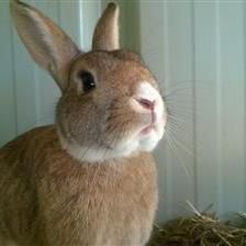 Toodles - http://www.woodgreen.org.uk/rehome/small_animals/9173_toodles