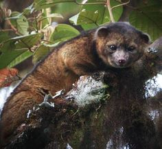 Amazing recent discoveries in science - new species and more!  Pretty neat.