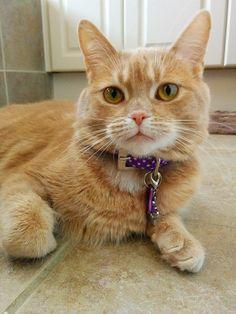 Annie Cat | Pawshake Waterdown