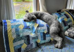 Relaxin' on the sofa #pumi #pumidog