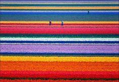 #Netherlands #AnnaPaulowna