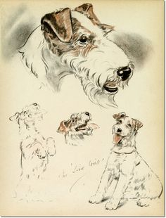 i have this diana thorne print Fox Terriers, Wirehaired Fox Terrier, Wire Fox Terrier, Terrier Dogs, Wire Haired Terrier, Vintage Fox, Dog Books, Dog Paintings, Dog Portraits