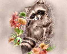 Raccoon   Love this