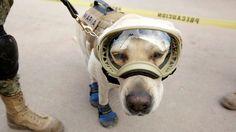 ICYMI: Japón recuerda a la perra Frida al homenajear la labor de sus brigadas de rescate en México