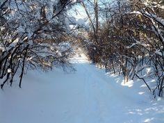 The Path by lwessman, via Flickr