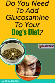 Does your dog have joint problems such as arthritis or hip dysplasia? Glucosamine for dogs can help restore its health. This supplement can be added to dog food or treats for a healthy diet. #glucosaminefordogs #doghealth