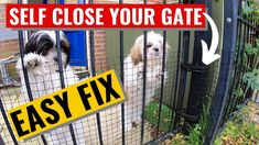 EASY Self Close Gate Secure To Keep Your Dogs, Puppies or Pets Safe Pet Safe, Your Dog, Gate, Self, Puppies, Dogs, Animals, Cubs, Animales