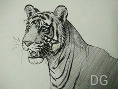 Noor. Tigress Ranthambore. Fountain pen sketch