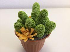 """Il Blog di Sam: Spiegazione della pianta grassa """"Glottiphyllum"""" al..."""