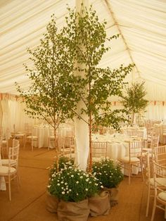 Trees as an alternative indoor wedding decor Marquee Wedding, Tent Wedding, Garden Wedding, Wedding Venues, Wedding Trees, Wedding Marquee Decoration, Tree Decorations Wedding, Birch Tree Wedding, Wedding Plants