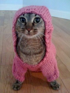 Hoodie cat ~ Oh my. This cat looks as if it's just waiting on the opportunity to run right out of that hoodie. hahaa!