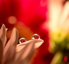 Beautiful Gerber daisies (Gerberas) refracted in droplets of water. They almost look like a pair of eyes!   Photograph by MING G. http://500px.com/photo/29803841  Prints available: http://lushview.wordpress.com/contact/