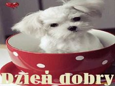 Animated Gif by Gigi Normand White Puppies, Small Puppies, Small Dogs, Dogs And Puppies, Gifs, Animation, Cat Sitting, Cute Images, Dog Photography