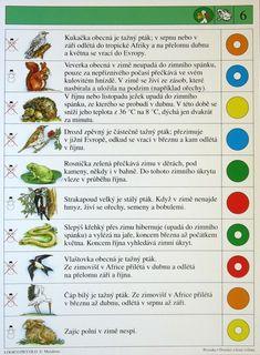 Soubor Logico Piccolo - Prvouka Domácí a lesní zvířata  Soubor obsahuje 16 hracích karet, vždy s 10 úkoly. Karta se zasune do  rámečku a barevné knoflíky se přisouvají ke správné English Vocabulary, Education, School, Fun, Drawings, Cousins, Animales, Sketches, Onderwijs