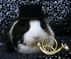 Top Hat Wearing, French Horn Playing Guinea Pig