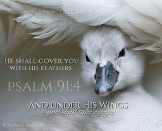 """Psalm 91:4 """"He shall cover you with His pinions, and under His wings you may seek refuge; His faithfulness is a shield and bulwark."""""""