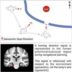 Found: The Missing Part Of Brain's 'Internal Compass' | IFLScience