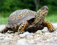 turtles - Google Search
