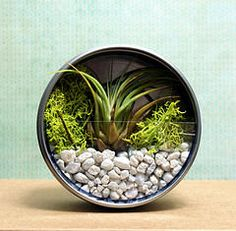 Air Plant Terrarium Magnet by soapdeligirl, via Flickr