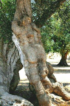 Puglia by Gianni Montanaro. Weird Trees, Magical Tree, Tree People, Tree Faces, Unique Trees, Tree Carving, Old Trees, Tree Trunks, Tree Sculpture