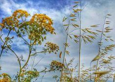 Calander, Israel, Love, Plants, Amor, Plant, Planets