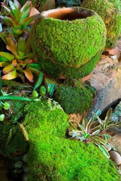 DIY Moss for the Garden- Blend up 1 Part Moss, 1 Part Sugar, 2 Parts Beer. pour or brush over pots, stone or pavers and moss will grow! G Teak pots and garden art Garden Crafts, Garden Projects, Garden Art, Garden Design, Garden Oasis, Diy Garden, Garden Items, Garden Trellis, Unique Gardens