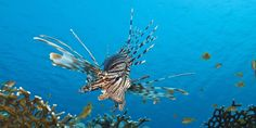 Free Images, Underwater Pictures, Home Aquarium, Unusual Animals, Motor Yacht, Island Life, Honduras, Beautiful Islands