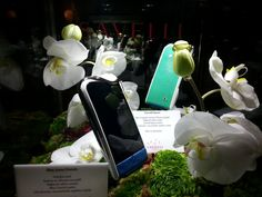 Switzerland, The Secret, Smartphone, Luxury, Crafts, Collection, Women, Women's, Crafting