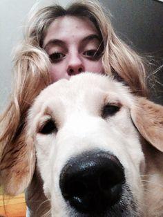 Dog  blondes